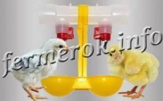 Схема пропаивания цыплят бройлеров антибиотиками и витаминами