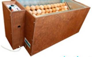Почему в инкубаторе не вылупились цыплята
