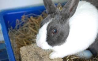 Как правильно вывести блох у кроликов