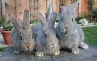 Инструкция по применению ампролиума для кроликов