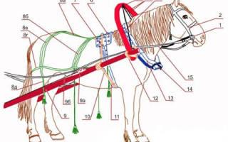Как правильно запрягать лошадей