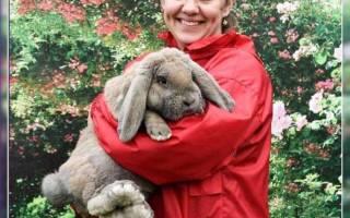 Кролик французский баран: особенности разведения в домашних условиях