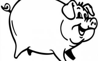 Как происходит процесс убоя свиней?