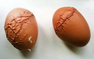 Можно ли давать курам несушкам яичную скорлупу