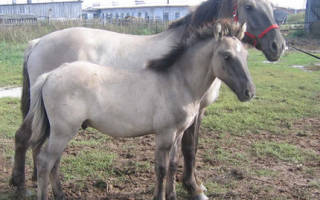 Описания лучших мастей лошадей