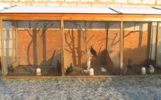 Как сделать вольер для фазанов своими руками