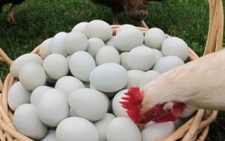 Почему куры клюют яйца и что при это делать?