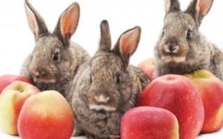 Можно ли кормить кроликов яблоками