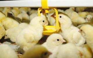 Байтрил для цыплят: инструкция по применению