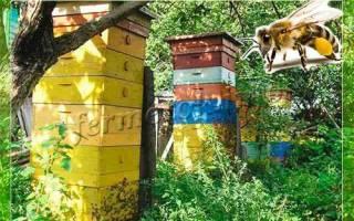 Как разводить пчел в многокорпусных ульях