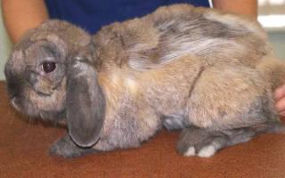 Почему у кролика выпадает шерсть