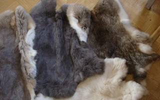 Как происходит выделка шкур кролика в домашних условиях