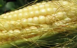 Лучшие разновидности кукурузы