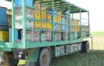 Вместо 10 ка ульев: как использовать пчелопавильон