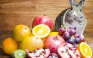 Какие овощи и фрукты можно давать кроликам