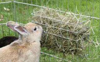 Покупаем или заготавливаем сено для кроликов