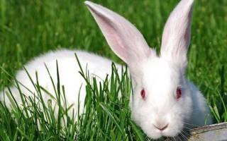 Чем лечить у кроликов запор