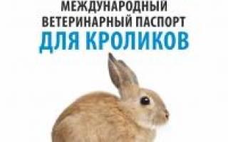 Правильная транспортировка кроликов на дальние расстояния