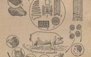 Что такое цистицеркоз свиней