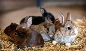 Новорожденные кролики: уход и содержание