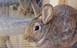 Понос у кроликов: что делать, как и чем лечить
