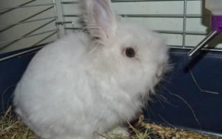 Секреты успешного разведения ангорских кроликов