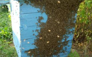 Способы и оборудование для ловли пчелиных роев