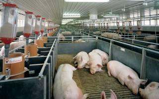 Как обустроить правильную вентиляцию свинарника: преимущества и недостатки основных видов