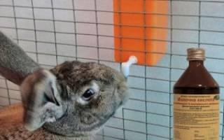 Молочная кислота для кроликов: дозировка, инструкция по применению