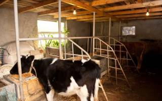 Как сделать стойло для коровы
