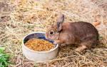 Можно ли давать кроликам зерно пшеницы