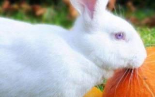 Можно ли кормить кроликов тыквой