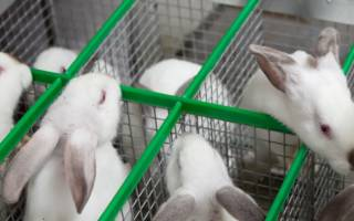 Мини ферма для разведения кроликов