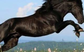 Общие характеристики и особенности карачаевской породы лошадей