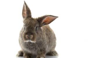 Кожные заболевания кроликов: фото и описание, симптомы и лечение