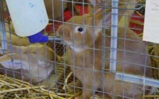 Как сделать автоматическую поилку для кроликов