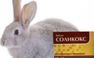 Инструкция по применению кокцидиостатиков для кроликов