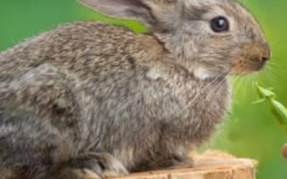 Как кормить кроликов горохом