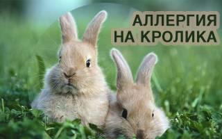 Как проявляется аллергия на кроликов: у ребёнка и у взрослых