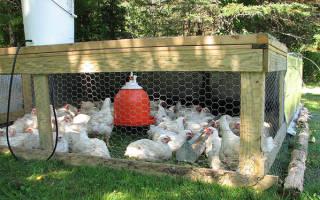 Заболевания цыплят: симптомы, профилактика и лечение