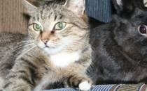 Как уживаются кошка и кролик в одной квартире