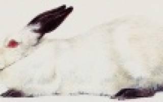 Русский горностаевый кролик: характеристика породы и особенности содержания