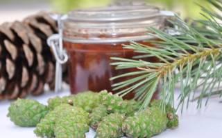 Чем полезен мед из сосновых побегов?