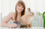 Как ухаживать за декоративным кроликом в квартире