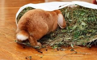Что едят и чем кормить кроликов зимой