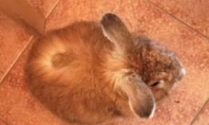 Как вывести лишай у кроликов