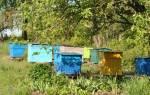 Как избежать трудностей во время перевозки пчел