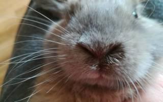 Как повысить иммунитет у кроликов