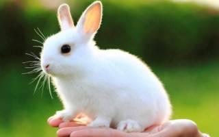 Почему кролик хрюкает и тяжело дышит