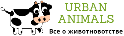 Urban-Animals